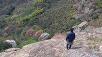 山神社の岩場の上で