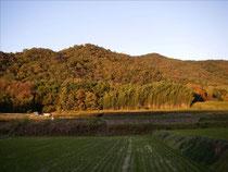 畑山の夕景