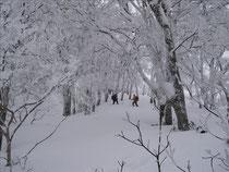 横行谷上部のブナ林