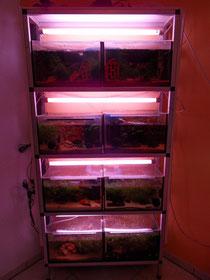 Anlage nach Inbetriebnahme - vor Umrüstung auf LED