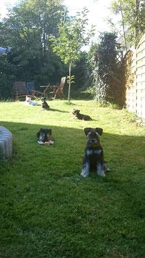 Bei uns im Garten ist immer was los