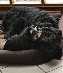 Ginny von den Breukers mit ihrem besten Freund Vico