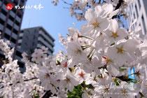 東京・麻布十番〈3/22・11時〉