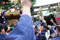 牛嶋神社大祭 神輿連合宮入:十二番・太平一丁目