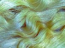 セリシンを残したままの糸。しゃっきりした強い手ざわり。