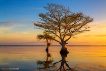 Sonnenaufgang am Blue Cypress Lake