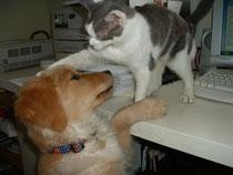 Basking Ridge Dog Training
