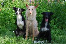 Mehrhundehaltung bei Eva: drei Damen aus dem Süden