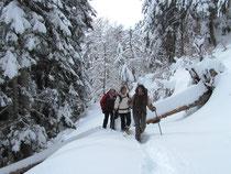 Raquettes à neige en forêt de l'Escalette