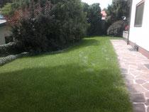 Rasen im Hochsommer