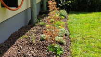 Eine Ecke wurde neu mit Sukkulenten bepflanzt