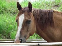 Reining und Cowhorse Pferde