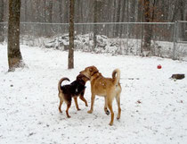 Cowboy and Annie playing