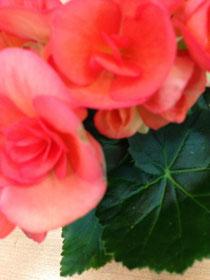 3月のお花。