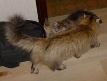Otrada e cucciola Rara Avis