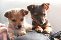 Merle und Lotta