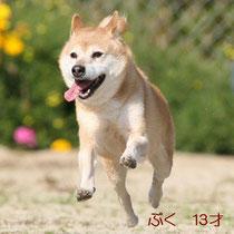 2009年撮影 飛行犬