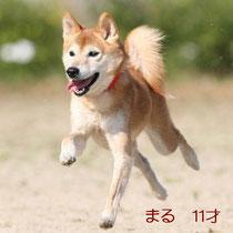 2009年撮影飛行犬