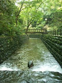 矢沢川の渓谷