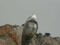Il riposo del gabbiano (c) Patrizia Grotta