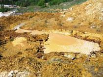 Neu angelegtes Laichgewässer für die                       Gelbbauchunke
