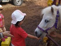 白い馬にエサをあげる、赤いTシャツ、帽子をかぶった子ども