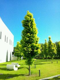 http://jp.fotolia.com/id/6591823 © nyul