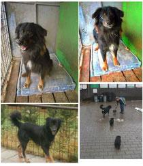 Adoptiert 2014