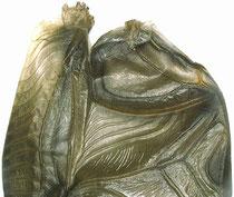 linker Vorderflügel mit Schrilleiste