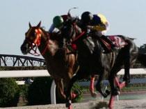 ドリームーマジシャン号と鞍上の尾島騎手