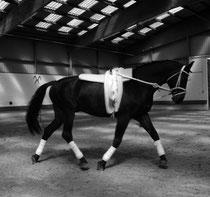 Ehemalige Pferde