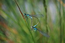 Kleingewässer bieten einer Vielzahl von Tieren und Pflanzen einen Lebensraum.