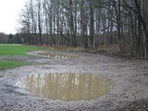 Die beiden neuen Kleingewässer füllen sich aufgrund der ergiebigen Niederschläge der letzten Tage schnell mit Wasser.