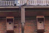 In diesen Dohlenkästen an der Walter-Lehmkuhl-Schule sind derzeit die NABU-Dohlen-Webcams auf Sendung.