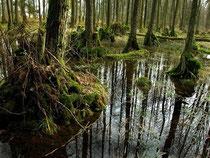 """Der Erlenbruchwaldbereich im NABU-Wald """"Hölle"""" bei hohem Wasserstand im Frühjahr."""
