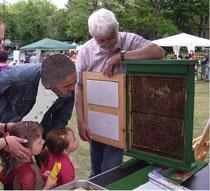 Bienenschaukasten mit Besuchern