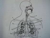 呼吸器系の勉強