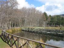 Una veduta del laghetto di Gambarie