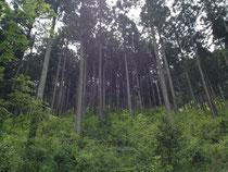 昨年択伐により構造材に用いられた森林