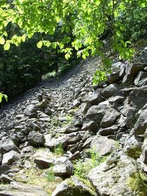 Im Steilhang der Teichschlucht
