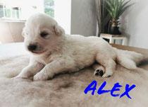 En ons kleine ventje Alex weegt 1360 gram hij is de kleinste van het nest, maar o zo schattig.