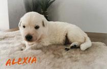 Alexia 2 weken en weegt 1840 gram ze is op het moment het zwaarste pupje.