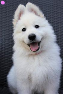 Amalia heet nu yuki