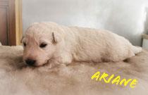 Ariane 2 weken en weegt 1740 gram