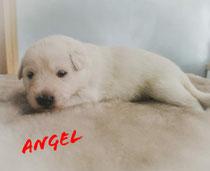 Angel 2 weken en weegt 1670 gram