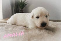 Ze zijn 2 weken Amalia weegt op het moment 1530 gram