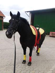 EM-Stimmung auch bei uns Voltis :) -Deutschland-Pony