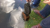 Trauriger Fang: Baustellenlampe aus Zeuthener See gefischt