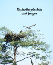 Fischadlerpärchen - Alle Rechte bei Northern Lights Flutes - Jürgen Hochfeld