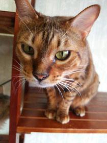 猫cafe キャッチー~和歌山にある猫カフェ | 子猫のへや